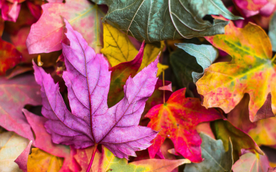 Fall Maintenance Tips For Your Home's HVAC System